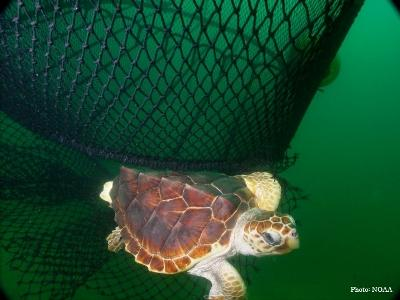Loggerhead Turtle Consortium For Wildlife Bycatch Reduction
